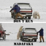 Funny Memes - dont run