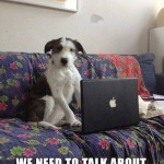 Animal Memes - concerned doggie