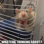 Animal Memes - great listener