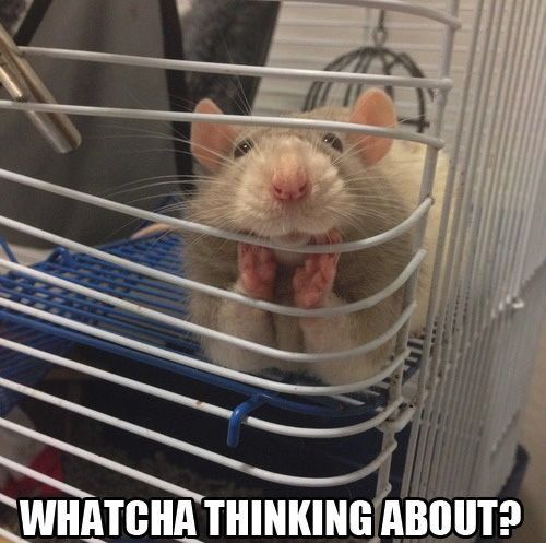 Animal Memes - great listener
