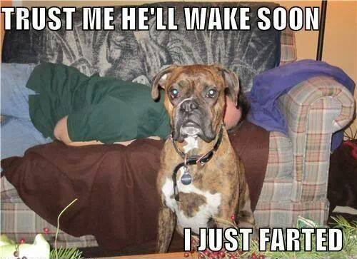 Animal Memes - i just farted