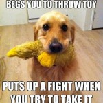Animal Memes: begs you