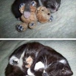 Animals Memes - cuddly kitty