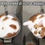 Animals Memes: cappuccino kitty