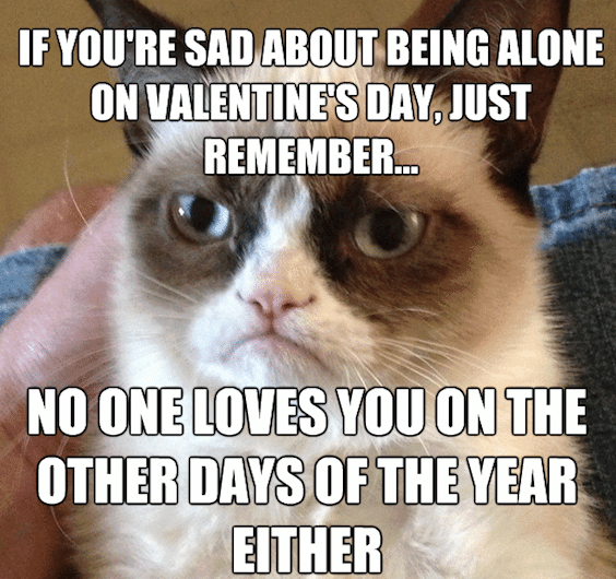 Funny Animal Memes - valentines day grumpy cat