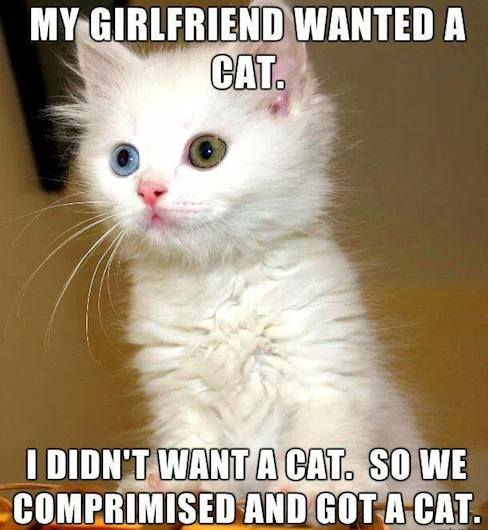 Funny Animal Memes - wanted a cat