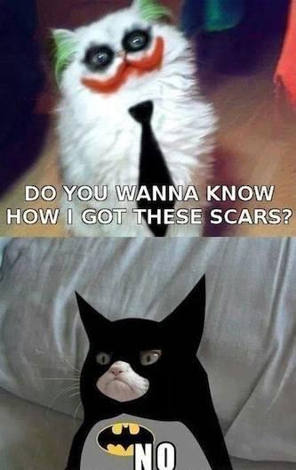 Funny Memes - grumpy cat batman