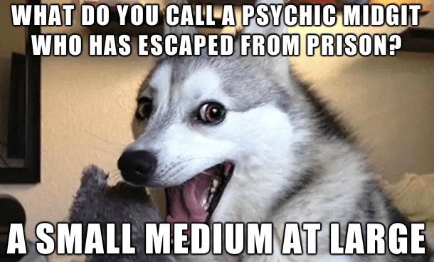 Funny Animal Memes - small medium at large