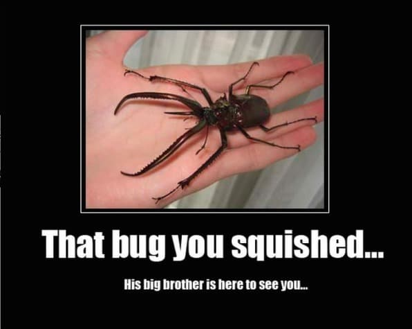 Funny Animal Memes - that bug you squished