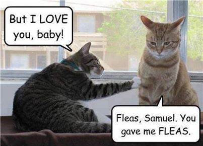 Funny Animal Memes - you gave me fleas