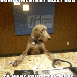 Animal Memes - complimentary belly rub