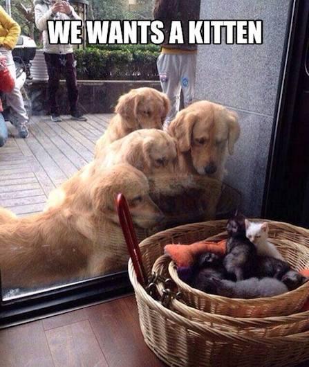 Funny Animal Memes - staring match