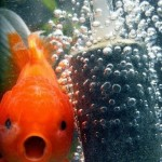 Funny Animal Memes - surprised gold fish