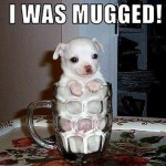 Funny Animals Memes - i was mugged