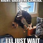 Funny Cats Memes -ill just wait