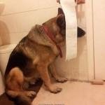 Animal Memes: bath time