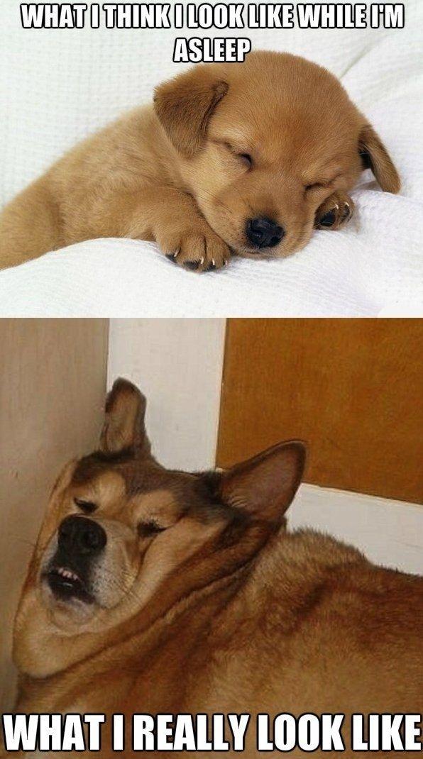 What I look Like Asleep