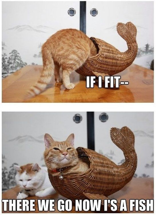 Animals Memes: cat fish