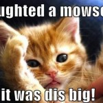 Animals Memes: cat mouse