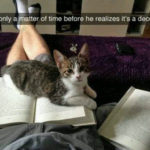 Cat is fooled by decoy book